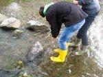 Gute Augen und Fachkenntnisse sind notwendig, um die winzigen Wasserbewohner zu identifizieren. (Foto: WBG/Eggers)
