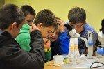 Ein Wurm wird beobachtet und unter dem Mikroskop näher untersucht. (Foto: SMMP/Hentrich)